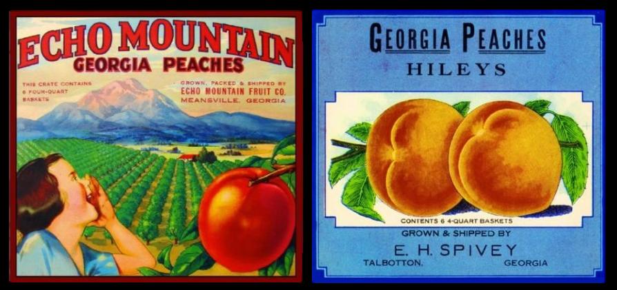 Talbotton Georgia Hileys Georgia Peaches Peach Fruit Crate Label Art Print